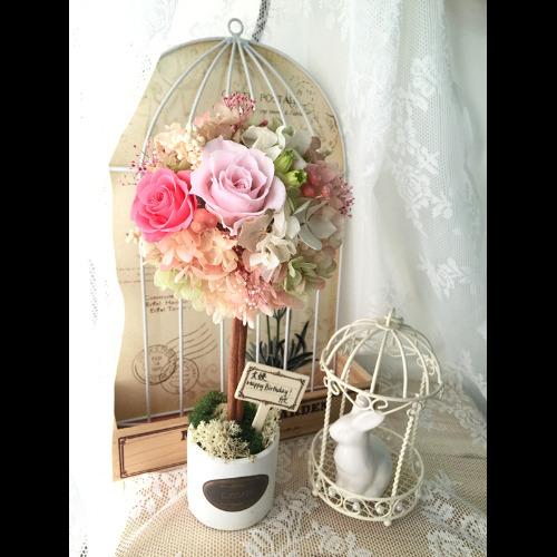 保鮮花繡球樹