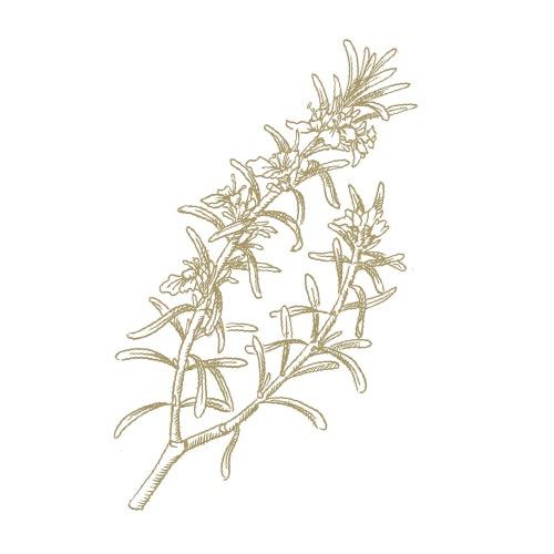 Rosemary (10ml)