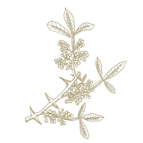 Tomar Seed (10ml)