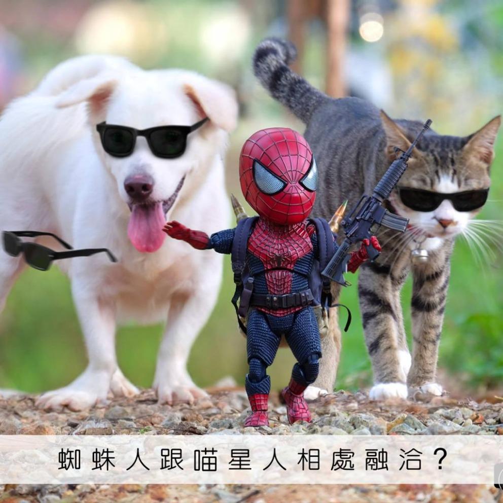 蜘蛛人跟喵星人相處融洽?